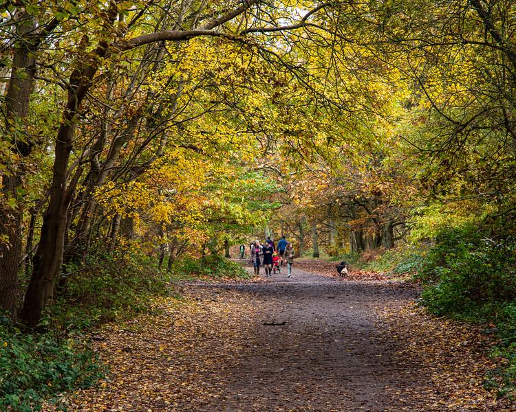 Autumn on Wimbledon Common