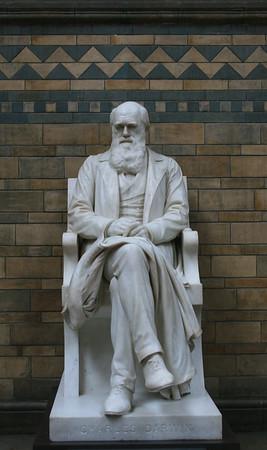 Charles Darwin, Natural History Museum.