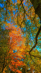 Autumn in Hampstead Heath