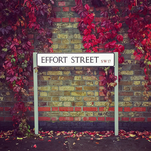 My Medical School is on Effort Street. 2016.