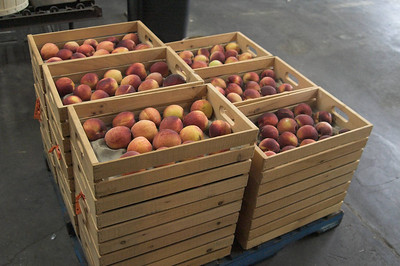Hand picked tree ripe peaches in homemade wood trays on a skid at a Londonderry Farm