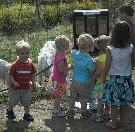 5 children focused on the feed machine with one boy ready to run. Goats eating food in background