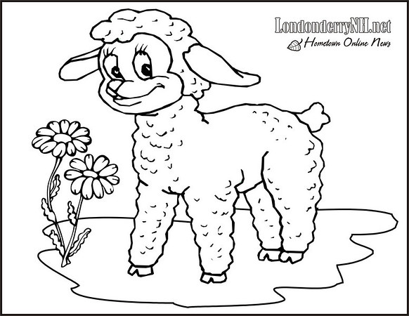 Lamb coloring book page