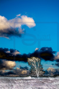 Lone Tree in Another World