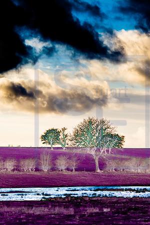 Alien Trees #3