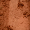 civet tracks (?) Mlilwane