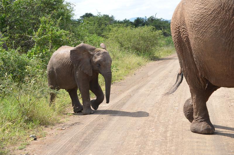 Baby elephant at Hluhluwe-Umfolozi Game Reserve