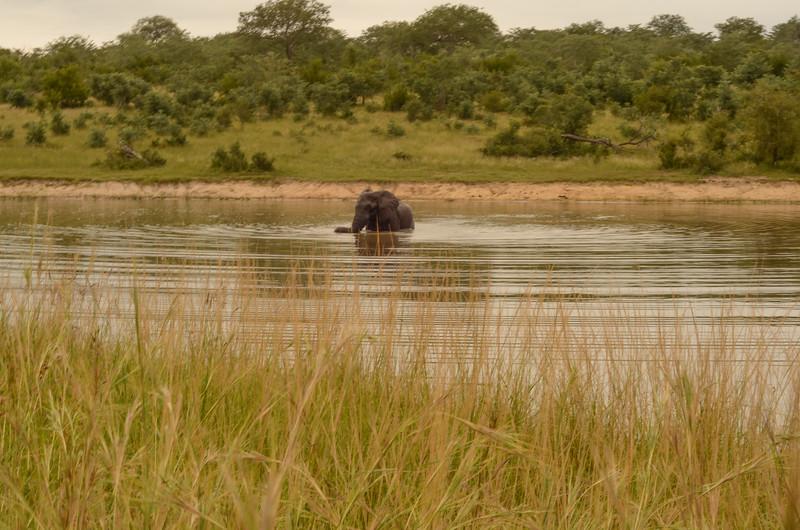 Elephant bathing- Kruger