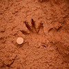 clawless otter(?) tracks at Mlilwane