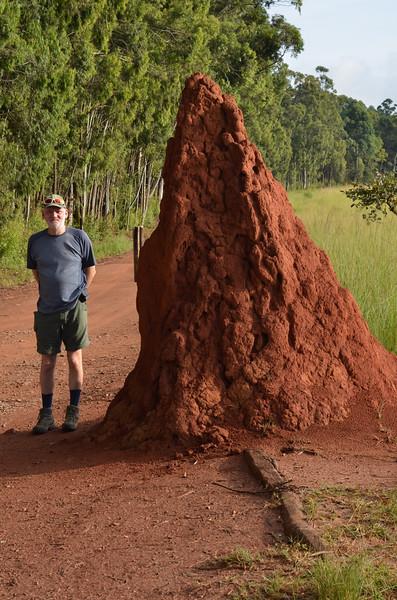 termite mound- 3 yrs old