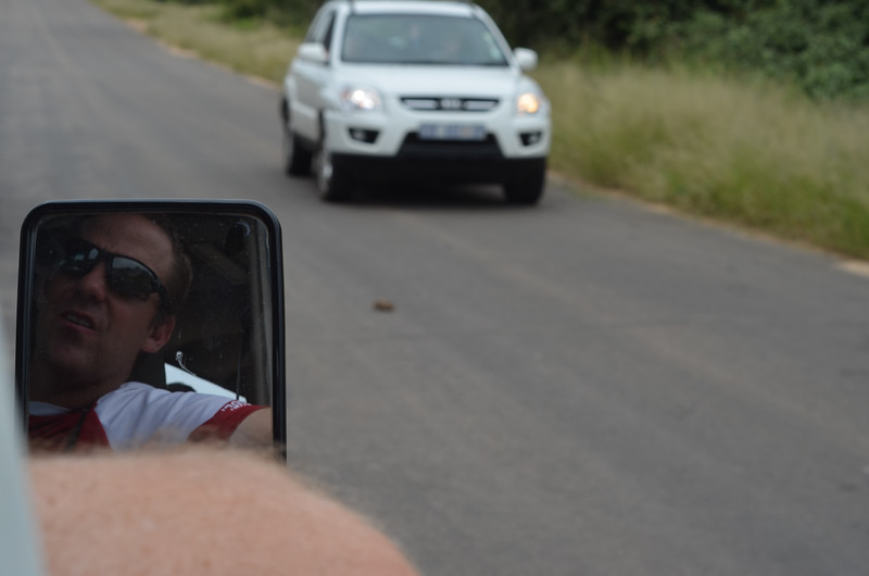small tortoise crossing the road and causing traffic jam- Kruger