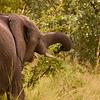 baby elephant Kruger