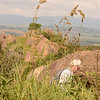 Nyonyane Mountain , Mlilwane