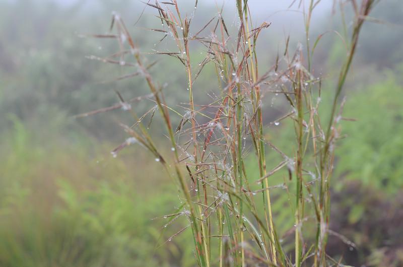 rain in the Drakensberg