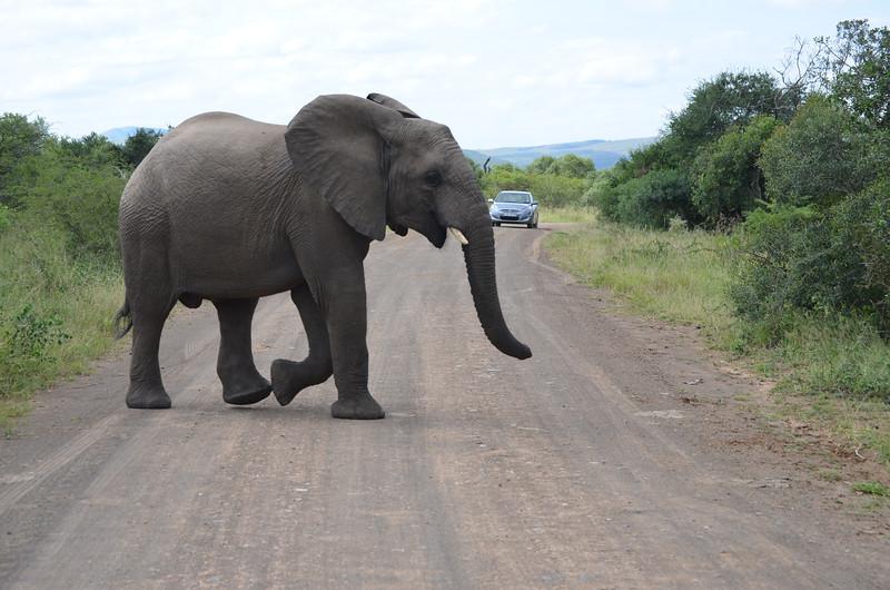 at Hluhluwe-Umfolozi Game Reserve