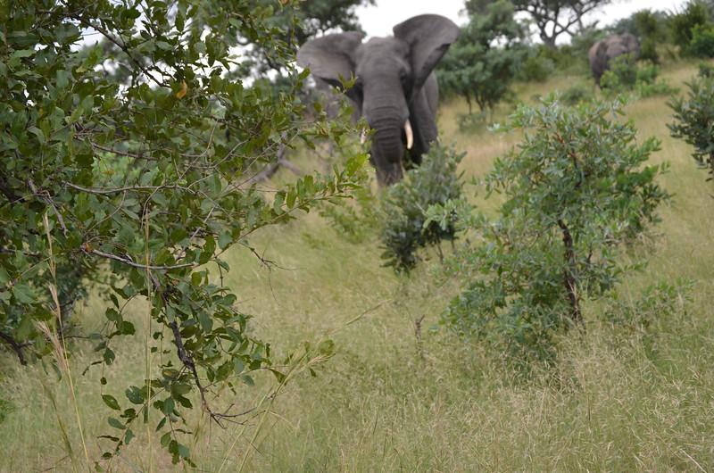 Elephants at Kruger