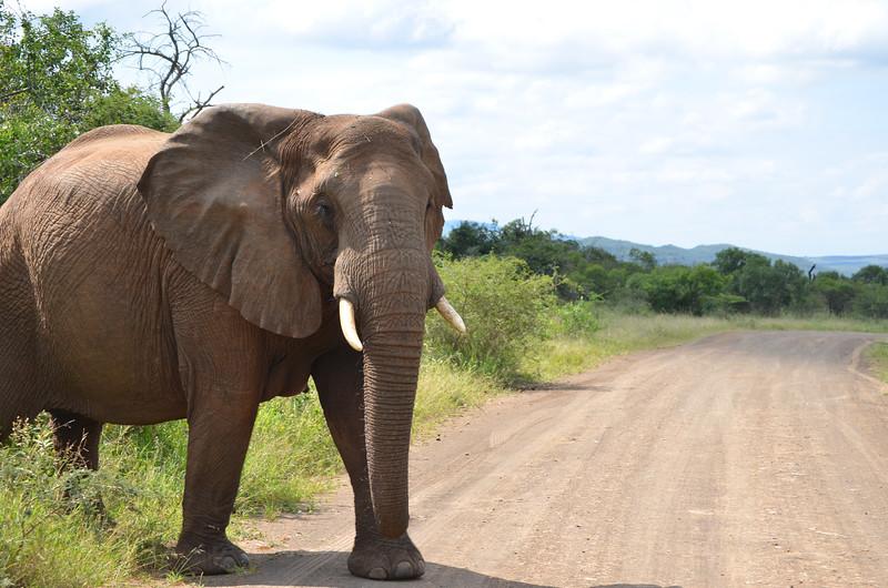 Elephants at Hluhluwe-Umfolozi Game Reserve