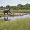 Elephant bathing -Kruger