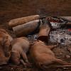 hog roast.... warthog family sleeping by the fire Mlilwale