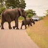 elephants at Kruger
