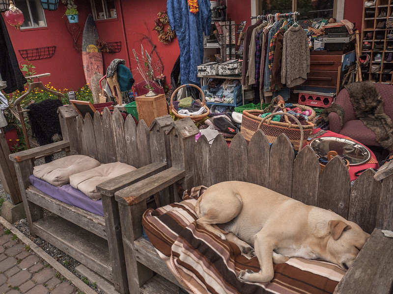 Nothing catchs my eye except this sleeping dog.