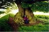 Offa's Dyke, Lyn, and a friendly Oak tree