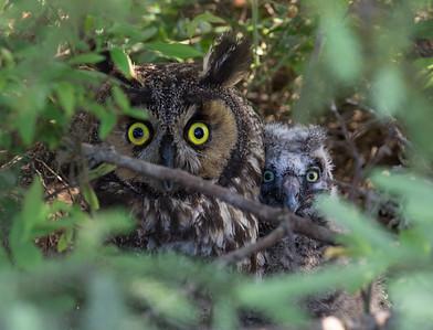 Owl Cuddle