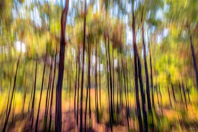 """""""Georgia Pines"""""""