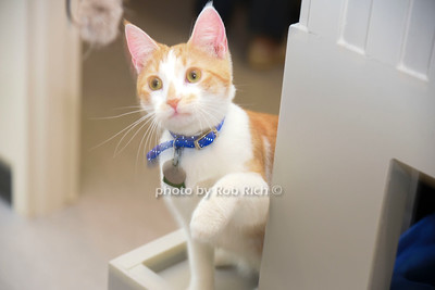 cats at Bianca's furry friends facility photo by Rob Rich/SocietyAllure.com ©2019 robrich101@gmail.com 516-676-3939