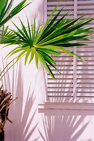Palm and shadow, Key West.