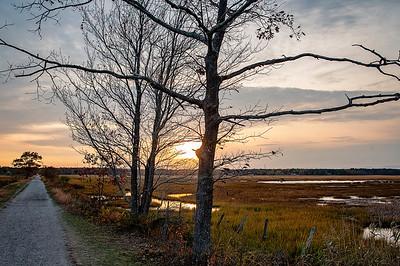 Scarborough Marsh 010