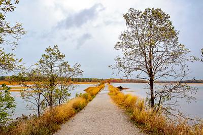 Scarborough Marsh 005