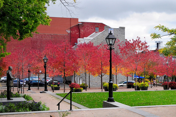 Beautiful fall foliage just north of Place Jacques-Cartier.