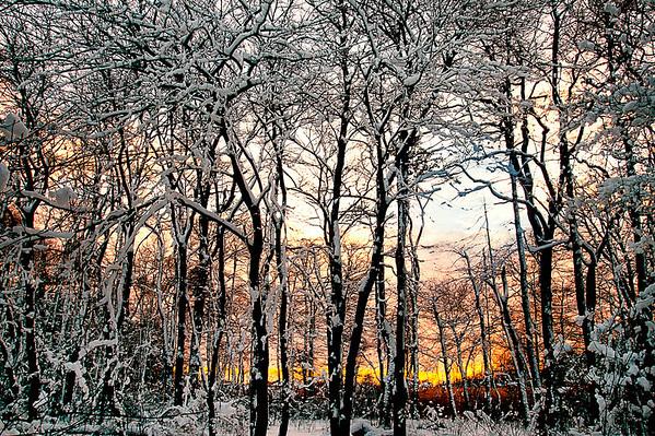 Sun setting behind snow covered trees at Gardiner County Park, Bayshore, NY.