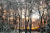 Sun setting behind snow covered trees at Gardiner County Park, Bayshore, NY.