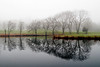 Bare trees reflect in a pond on a cold and foggy December morning in Middle Island, NY.