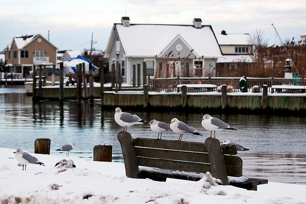 Seagulls sitting pretty after a snow dusting at Bergen Point, West Babylon, NY