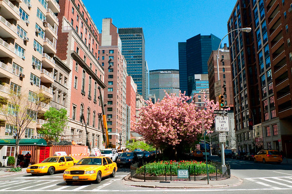 Park Avenue Magnolia Tree with Met Life Building in the background