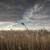 Weeds In The Clouds, Fire Island