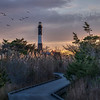 Birds Flying By Fire Island Lighthouse