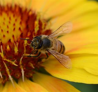 Bee & Pollen