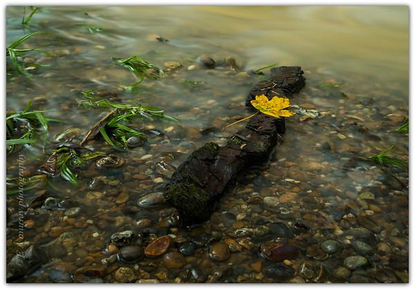 Long exposure, wildlife and macro