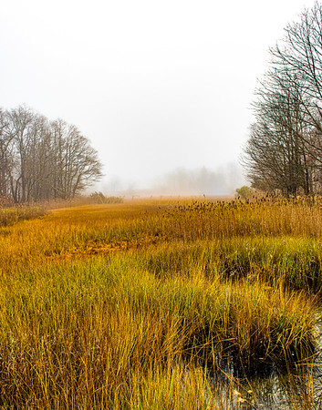 Winter Wetlands Emerging from the Fog