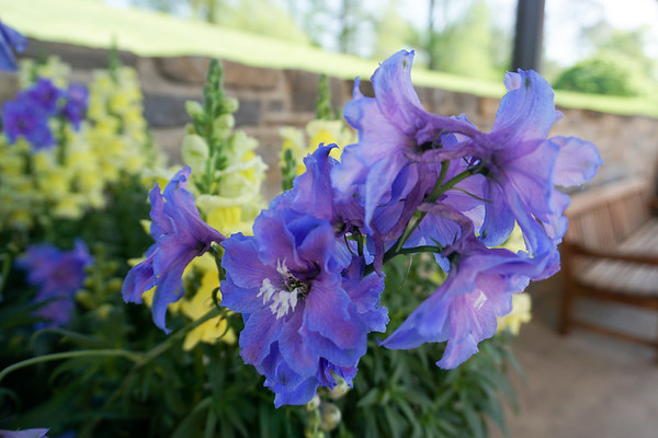Longwood Gardens Field Trip (2nd and 3rd Grades)