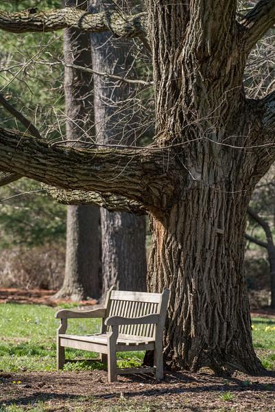 3-22-16 Bench - Oak Knoll - Longwood Gardens-17