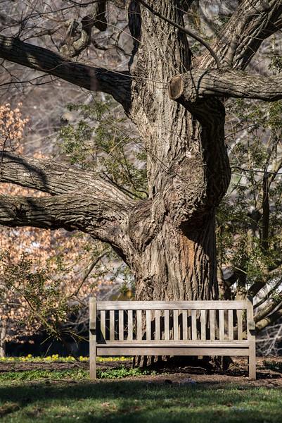 3-22-16 Bench - Oak Knoll - Longwood Gardens-16