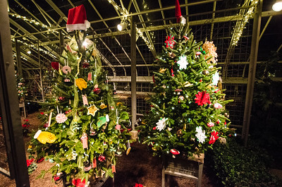 Shots from Christmas at Longwood Gardens