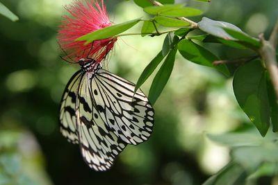 Butterflies IMG_4617