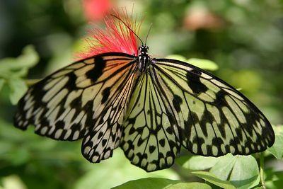 Butterflies IMG_4640