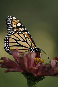 Butterflies IMG_8169